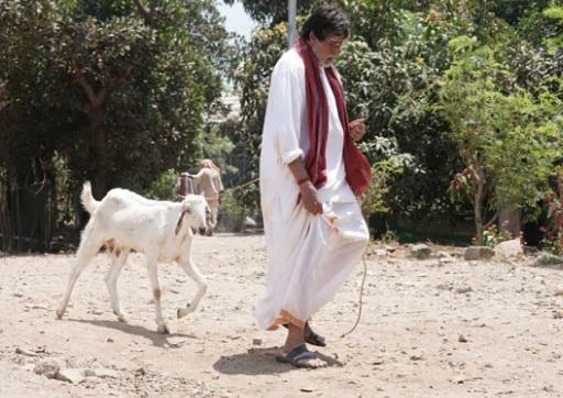 بکری چراتے نظر آئے امیتابھ بچن