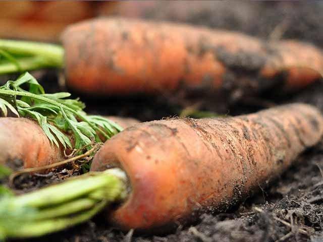 آلودہ غذائیں انسان صحت کے لیے نقصاندہ،تحقیق