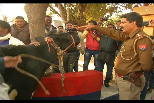 عبدالغفار نے گئو رکشکوں کے خوف سے تھانہ میں لے جا کر باندھ دی اپنی گائے