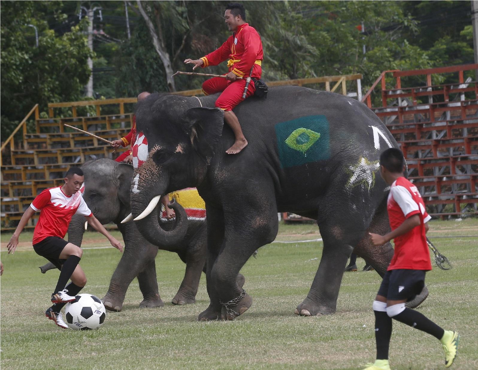 فیفا عالمی کپ سے پہلے ہاتھیوں نے کھیلا فٹ بال میچ
