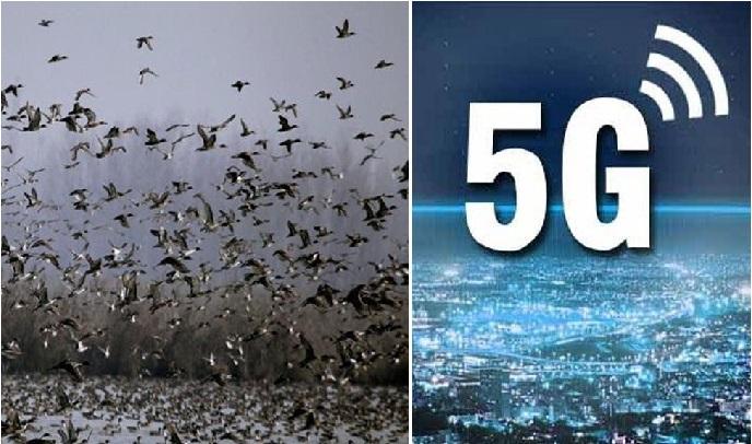 نیدرلینڈ میں 5G سے گئی سینکڑوں پرندوں کی جان