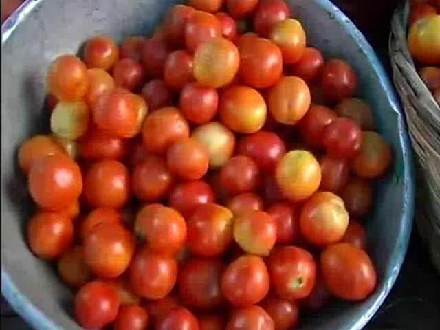 ٹماٹر کی پیداوار زیادہ ہونے سے اس کی قیمتوں میں کمی