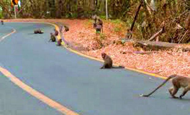 تلنگانہ کے محبوب آباد ضلع میں 30سے زائد بندر مردہ پائے گئے۔زہر دینے کا شبہ