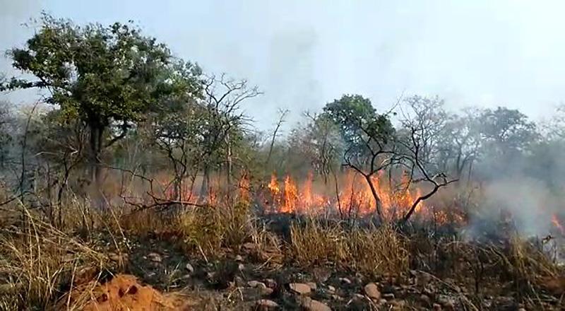 تلنگانہ:نلہ ملہ جنگلات میں پھر آگ