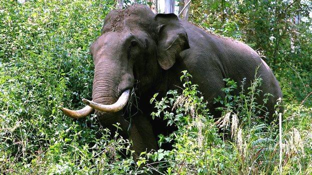 جنگلی ہاتھیوں نے خاتون کو کچل کر کیا ہلاک