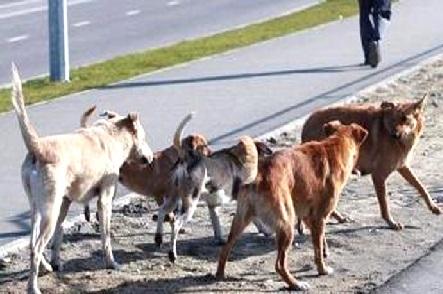جھارکھنڈ: ٹائلٹ کے لیے گھر سے نکلی بچی پر کتوں کا حملہ، گئی جان
