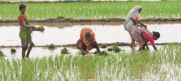 بہار زرعی یونیورسٹی کے سائنسدانوں کی ٹیم کاشتکاری کے مسائل سے روبروہوگی