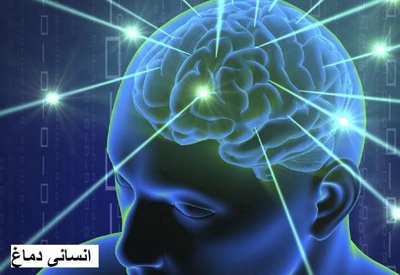 اپنے دماغ کو مضبوط بنانے کے لئے کھائیں یہ غذا