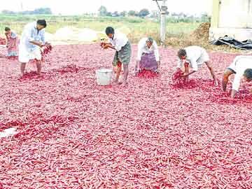 غیر موسمی بارش کی وجہ سے کسانوں کو شدید نقصان
