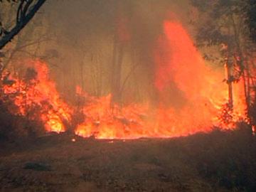 تروپتی کے جنگلات میں آتشزدگی