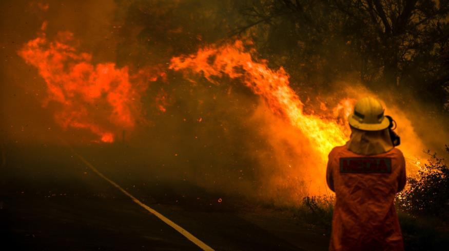 آسٹریلیا کے جنگلوں میں آگ سے گرینڈ سلیم پر بھی خطرہ