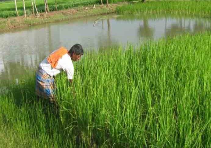 کانگریس نے کسانوں کو دھوکہ دیا:بی جے پی