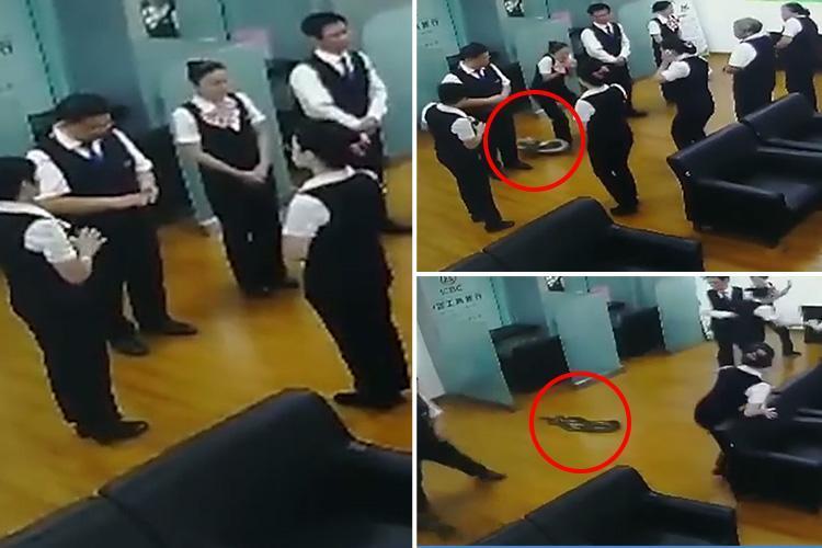 چین: بینک کی میٹنگ کے دوران چھت سے جب گر پڑا سانپ