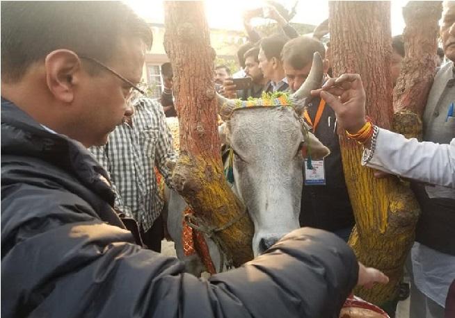 جو گائے کے نام میں ووٹ مانگتے ہیں، انہیں گائیوں کو چارہ بھی دینا چاہیئے:کیجروال
