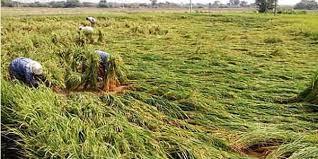 تلنگانہ کے کئی مقامات پر بے موسم بارش اور ژالہ باری۔ فصلوں کو نقصان پہنچا