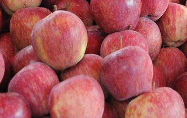 ہماچل پردیش کے سیبوں کی پانچ منفرد اقسام کو بحرین بھیجا گیا